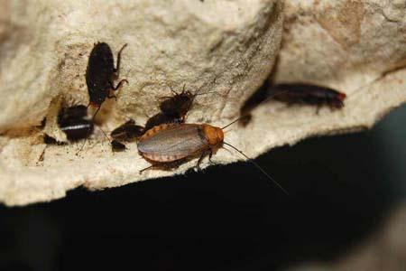 Тараканы, жуки... прочая мясная продукция.
